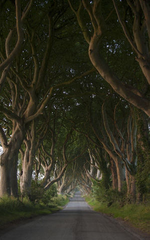 small-Dark Hedges, County Antrim